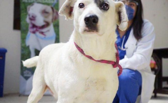 """""""Ningo"""", perro que sufrió crueldad animal, se pondrá en adopción: Manrique"""